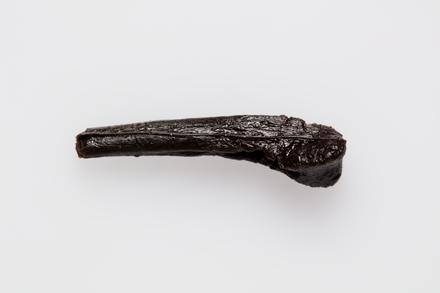"""Chordata Vertebrata Reptilia """"Dinosaur"""", LH2012, © Auckland Museum CC BY"""