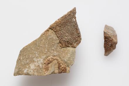 Chordata Vertebrata Reptilia, LH3192, © Auckland Museum CC BY