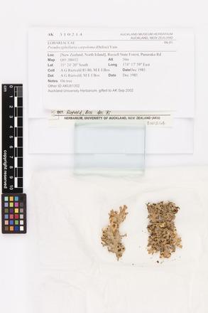 <em>Pseudocyphellaria carpoloma</em>, AK310214, © Auckland Museum CC BY