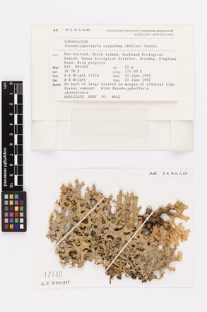 <em>Pseudocyphellaria carpoloma</em>, AK213440, N/A