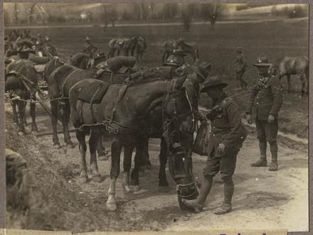 Feeding horses - Howitzer Brigade.
