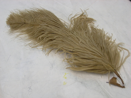 ostrich feather