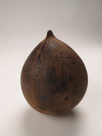 2013.x19; coconut