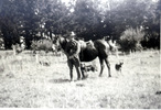 James browning standing by horse, in paddock, 2 dogs - This image may be subject to copyright