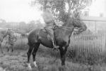 W.F. Baldwin, Salisbury Mounted Police uniform, astride horse - No known copyright restrictions