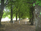 Avenue of Remembrance, Greytown Soldiers Memorial Park (photo G.A. Fortune 2012) - Image has All Rights Reserved