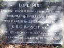 Image of Plaque at Rotorua Cemetery marking a tree that was a seedling of the Lone Pine at Gallipoli planted by C. R. G. Bassett 25 April 1965 - This image may be subject to copyright
