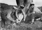 Members of TAS party from HMNZS Bellona at Great Barrier Island on demolitions. (l-r) 'Daisy' Brewster, Reginald Lowen, CPO 'Dinger' Bell (approximately 1950) - This image may be subject to copyright