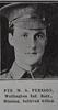 Portrait, Private Martin Andrew Persson (10/1950) from the Weekly News 1915. Kindly provided by Onward Project, Phil Beattie & Matt Pomeroy. No known copyright restrictions.
