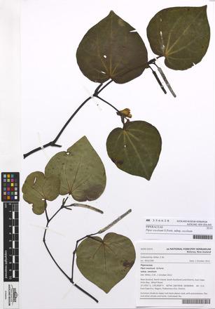 Piper excelsum excelsum, AK356628, N/A