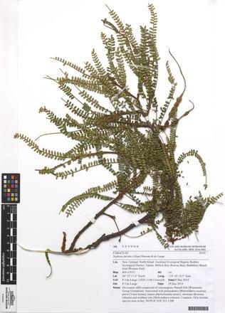 Sophora fulvida, AK355908, N/A