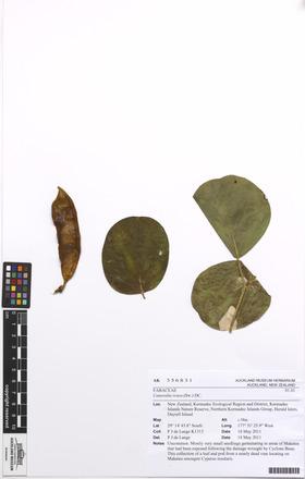Canavalia rosea, AK356831, N/A