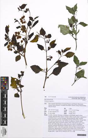 nigrum/Solanum, AK357088, N/A