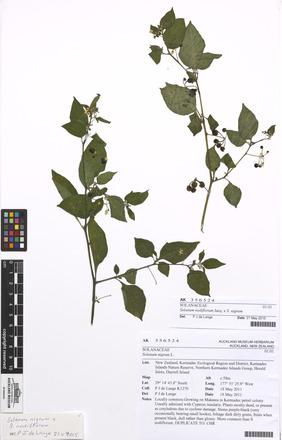 nigrum/Solanum, AK356524, N/A