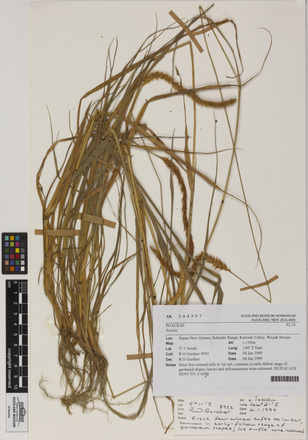 19494, AK344357, © Auckland Museum CC BY