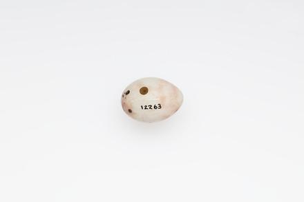 Fringilla coelebs, LB12263, © Auckland Museum CC BY