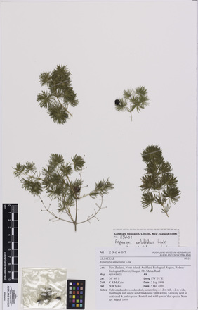 N/A, AK236607, © Auckland Museum CC BY