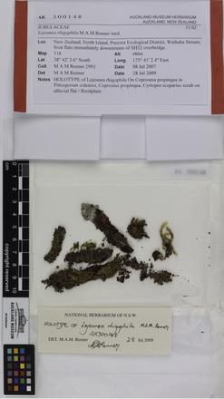Lejeunea rhigophila