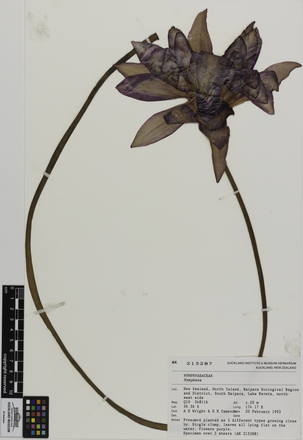 AK215287, Nymphaea, Photographed by: Eugene Wong Doe, photographer, digital, 24 Aug 2016, © Auckland Museum CC BY