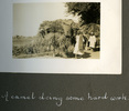 """Two Egyptian men with camels carrying loads of hay, """"A camel doing some hard work"""", Photo Album in Egypt of 638 Charles Honori Parks. Image kindly provided by Parks family. Image has no known copyright restrictions."""