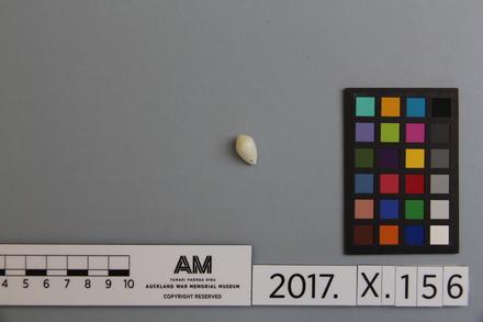 fragment, 2017.x.156