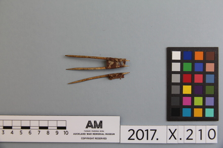 fragment, 2017.x.210