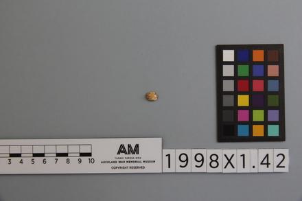 fragment, 1998x1.42