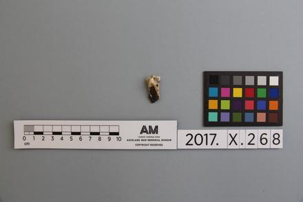 fragment, 2017.x.268