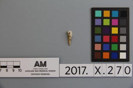 fragment, 2017.x.270