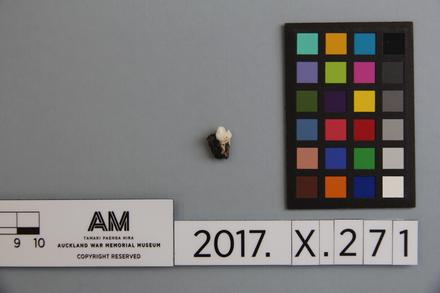 fragment, 2017.x.271