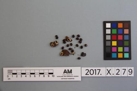 fragments, 2017.x.279