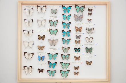 RT Shannon Collection, SB0663 © Auckland Museum CC BY
