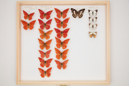 RT Shannon Collection, SB0589 © Auckland Museum CC BY