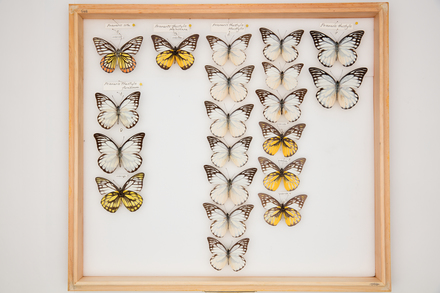 RT Shannon Collection, SB0653 © Auckland Museum CC BY