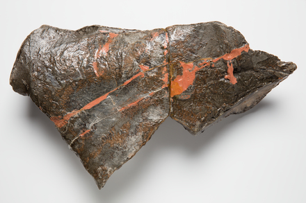 Chordata Vertebrata Reptilia, LH1524, © Auckland Museum CC BY