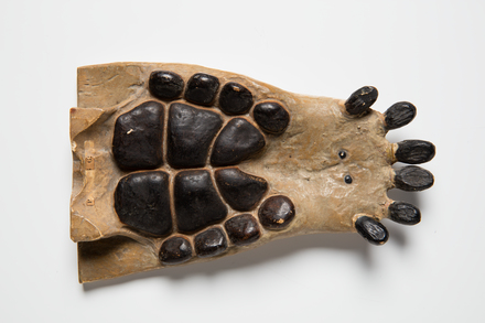 Placodus gigas, LH3906, © Auckland Museum CC BY