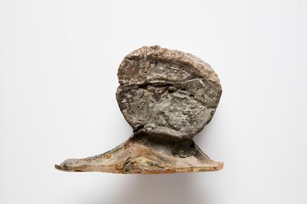 Chordata Vertebrata Reptilia Plesiosauria ELASMOSAURIDAE, LH1525, © Auckland Museum CC BY