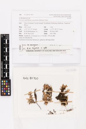 Pseudocyphellaria carpoloma, AK310191, © Auckland Museum CC BY