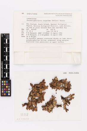 Pseudocyphellaria carpoloma, AK204506, © Auckland Museum CC BY