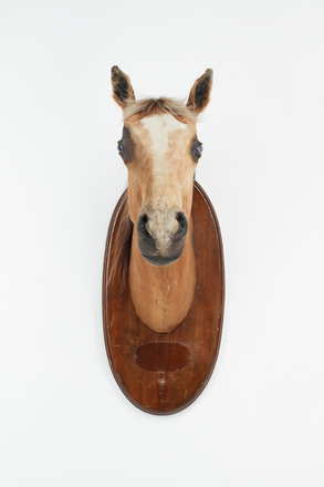 horse head and tail, 2014.x.21, Photographed by Jennifer Carol, digital, 26 Sep 2018, © Auckland Museum CC BY