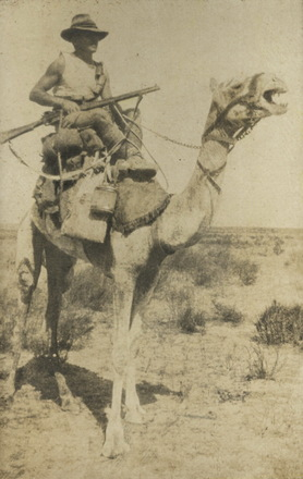 Photograph of Robert (Bob) Fryer mounted on his camel during the war. Image kindly provided by Kaye Dragicevich (November 2018). Image has no known copyright restrictions.