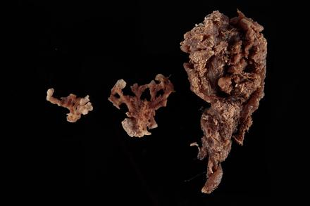 Porifera, MA124741, © Auckland Museum CC BY