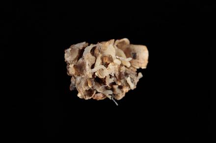 Porifera, MA124524, © Auckland Museum CC BY