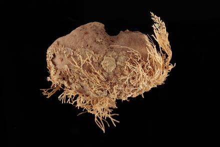 Porifera, MA656643, © Auckland Museum CC BY