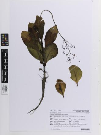 Talinum paniculatum, AK371344, N/A