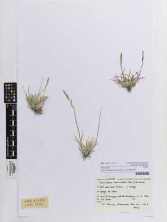Puccinellia fasciculata, AK367377, N/A