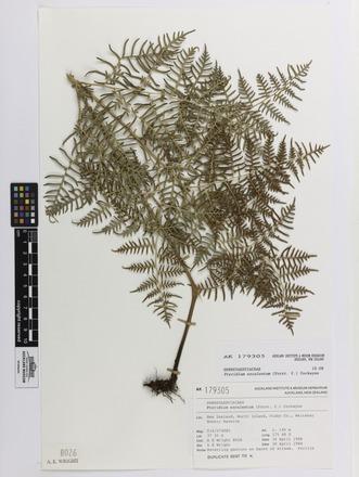 Pteridium esculentum, AK179305, N/A