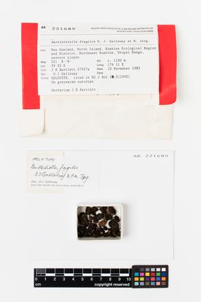 Bartlettiella fragilis, AK221689, © Auckland Museum CC BY