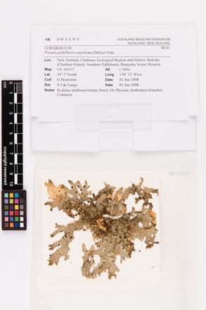 Pseudocyphellaria carpoloma, AK303593, © Auckland Museum CC BY