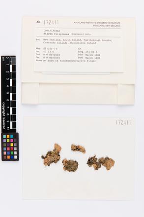 Sticta fuliginosa, AK172411, © Auckland Museum CC BY